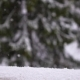 Beautiful Snowfall On The Background Of Spruce - VideoHive Item for Sale