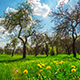 Spring Apple Orchard - VideoHive Item for Sale