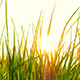 Fresh Grass And The Sun - VideoHive Item for Sale