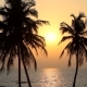Palm Trees Silhouette At Sunset - VideoHive Item for Sale