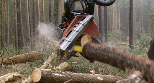 Forestry , Forest , tree felling