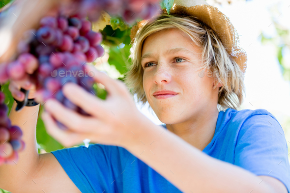 Boy in vineyard - Stock Photo - Images