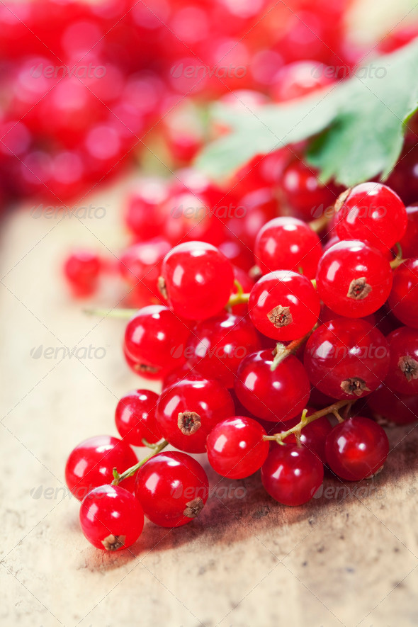 ripe red currant berries - Stock Photo - Images