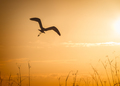 bird in silhouette - PhotoDune Item for Sale