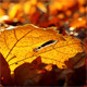 Autumn Foliage - Timelapse - VideoHive Item for Sale