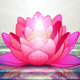 Lotus Flowers in a Zen Garden - GraphicRiver Item for Sale