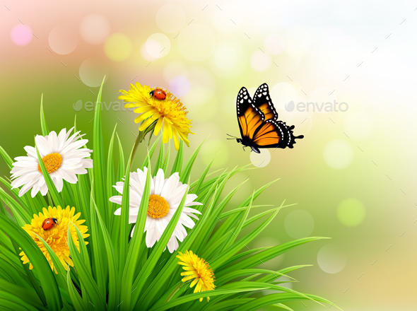 nature summer daisy flowers with butterfly by almoond graphicriver