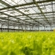 Green Plantation In The Greenhouse - VideoHive Item for Sale
