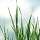 Grass and Sky 01 - VideoHive Item for Sale