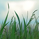 Grass and Sky 02 - VideoHive Item for Sale
