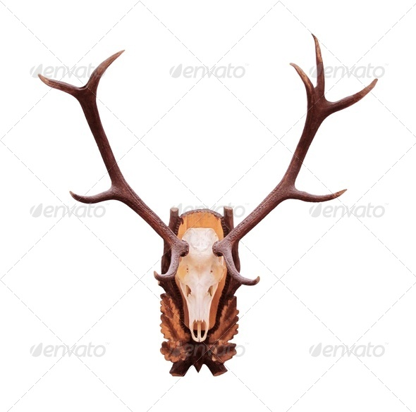 Deer antlers - Stock Photo - Images