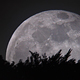Moon over the Forest - VideoHive Item for Sale