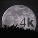 Moon through the Trees - VideoHive Item for Sale