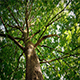 Looking Up At Tree Canopy On Sunny Day - VideoHive Item for Sale
