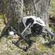 Drone Crashed into Tree Reveal - VideoHive Item for Sale