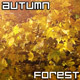 Autumn Forest with Golden Leaves - VideoHive Item for Sale