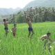 Kids Running And Jumping In Rice Field - VideoHive Item for Sale