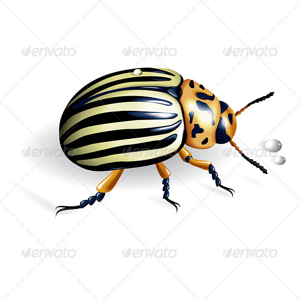 The Colorado potato beetle - Animals Characters