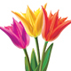 Bouquet of Tulips - GraphicRiver Item for Sale