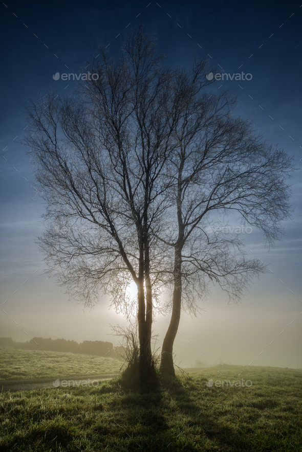 Trees backlight at dawn - Stock Photo - Images