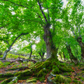 Mossy roots of a chestnut tree - PhotoDune Item for Sale