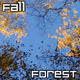 Forest in Fall - VideoHive Item for Sale