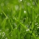 Green Grass With Dew Drops - VideoHive Item for Sale