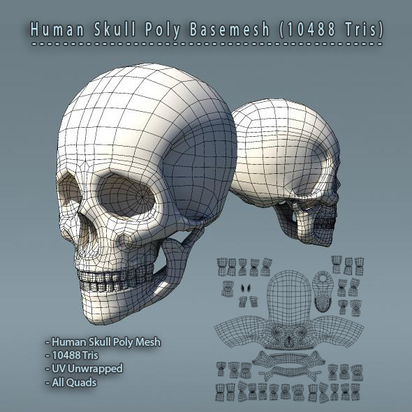 Human Skull Polygon Mesh V1.0 - 3DOcean Item for Sale