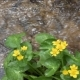 Yellow Flowers Near Creek - VideoHive Item for Sale