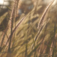 Grass Wind - VideoHive Item for Sale