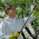 Handsome Guy Spraying Chemicals In The Garden - VideoHive Item for Sale