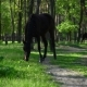 Horse Grazing On An Summer Meadow In The Forest - VideoHive Item for Sale