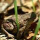 Toad In The Forest - VideoHive Item for Sale