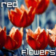 Red Flowers Nature Background - VideoHive Item for Sale