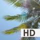 Sun Shining Through Palm Leaves - VideoHive Item for Sale