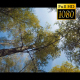 Tops Of The Trees In The Forest 2 - VideoHive Item for Sale