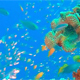Beautiful Glassfish with Blue Water Bacground - VideoHive Item for Sale