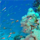 Glassfish with Blue Water Bacground - VideoHive Item for Sale