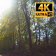 Walk In The Woods On A Sunny Day 3 - VideoHive Item for Sale