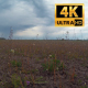 Weeds In The Field 3 - VideoHive Item for Sale