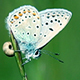 Butterfly and Fly - VideoHive Item for Sale