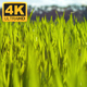 Natural Green Grass - VideoHive Item for Sale