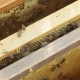 Bees Working on Frames of Honeycomb With Honey Inside the Beehive - VideoHive Item for Sale