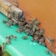 Bees Fighting At Beehive Entrance - VideoHive Item for Sale