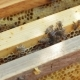 Honey Bees Working In Hive Beehive - VideoHive Item for Sale