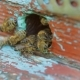 Of Bees Moving At Hive Entrance, Watching Bee Behavior - VideoHive Item for Sale