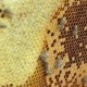 Beekeeper Working With Bee Honeycomb - VideoHive Item for Sale