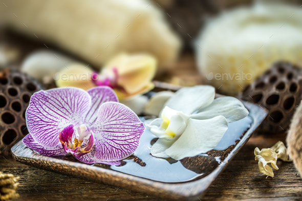Floating orchid - Stock Photo - Images
