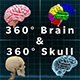 360° Brain + 360° Skull with Multiple Layers for Style and Editing - VideoHive Item for Sale