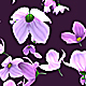 Falling Flowers - VideoHive Item for Sale